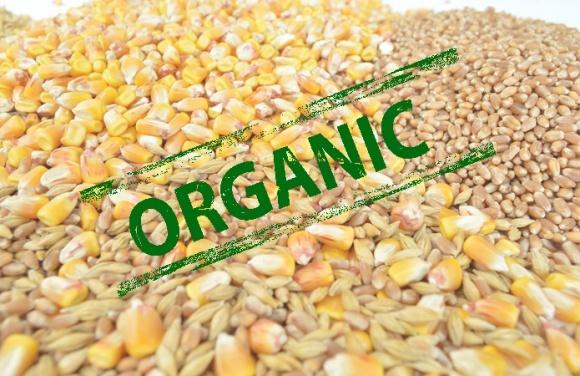 В украинском органическом экспорте резко преобладают корма фото, иллюстрация