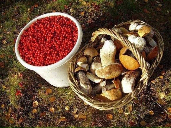 Как организовать маленький грибной бизнес в лесу? фото, иллюстрация