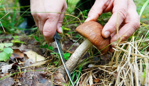 На Закарпатті приїжджих грибників побили всім селом фото, ілюстрація