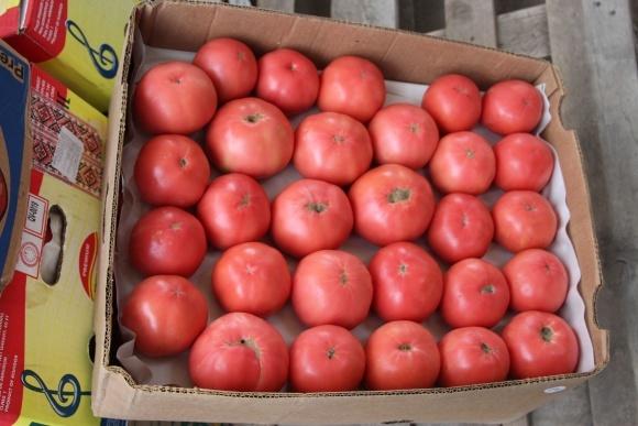 Україна скоротила експорт тепличних помідорів до історичного мінімуму фото, ілюстрація
