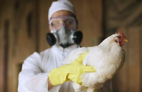 На Одещині загинуло понад 11 тисяч голів птиці від пташиного грипу фото, ілюстрація