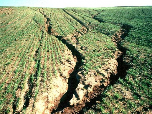 Щороку український ґрунт втрачає по 400-500 кг/га органіки фото, ілюстрація
