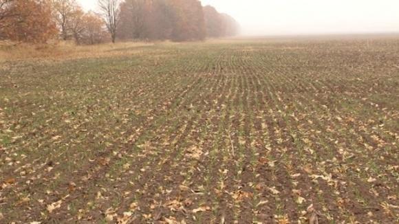 В Україні зволоження ґрунту одне із найгірших за останні 10 років фото, ілюстрація