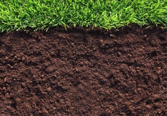 У Великобританії будуть платити фермерам, які захищають ґрунти фото, ілюстрація