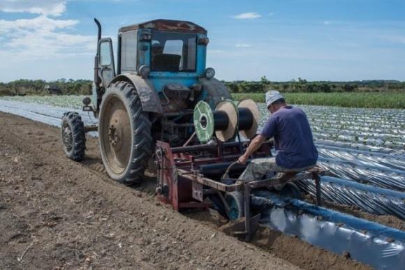 В Одесской области фермер начал выращивание земляники на грядах фото, иллюстрация