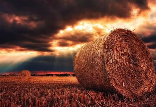 Как повлияет на урожай рекордная жара в Европе? фото, иллюстрация