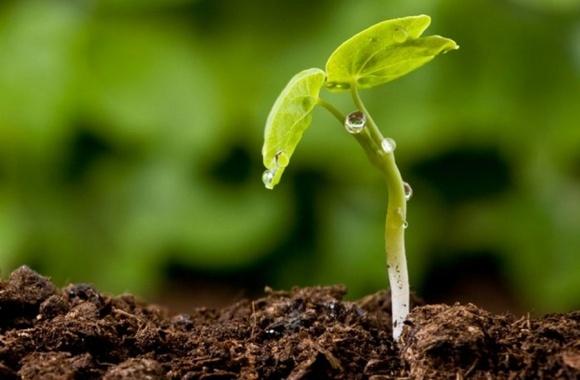 Агролайфхак: гумати посприяють збільшенню врожаю на 15-20% фото, ілюстрація
