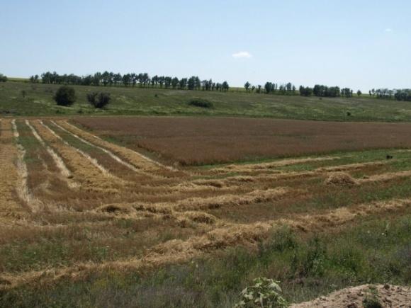 Землю у хмельницких фермеров заберут, чтобы вернуть гимназии и лицею фото, иллюстрация
