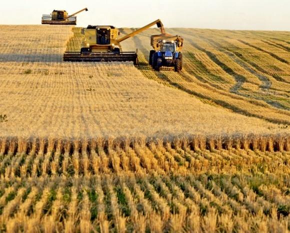 Снижение посевных площадей пшеницы в США выгодно Украине фото, иллюстрация