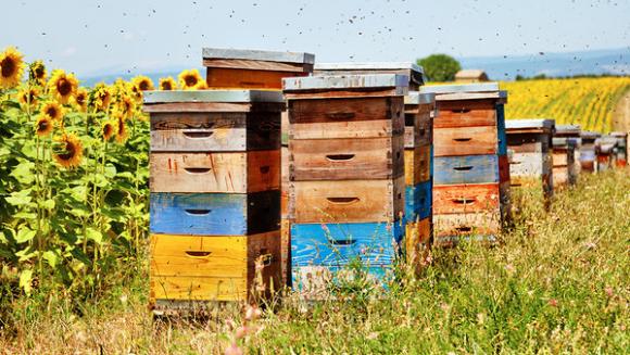 Україна нарощує виробництво меду фото, ілюстрація