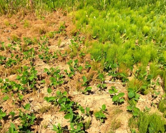 Доля кислых почв в Украине достигла 19% фото, иллюстрация
