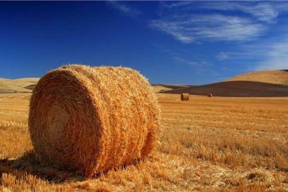 Названы основные проблемы биоэнергетического рынка Украины фото, иллюстрация