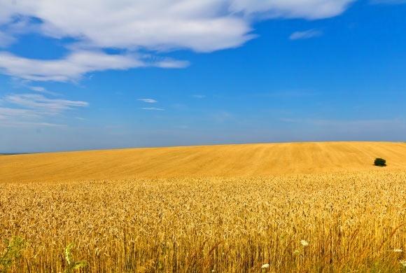 Херсонщине дают 70 млн грн на орошение земель фото, иллюстрация