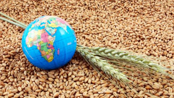 Україна у І півріччі 2018 року експортувала зернових на 11% менше торішних показників  фото, ілюстрація