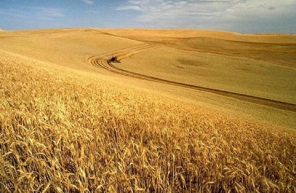 Частка причорноморських країн в світовому експорті зерна скоротиться вперше за 6 років фото, ілюстрація