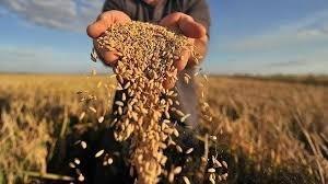 Предложение зерновых в сезоне 2017–2018 годов сохраняется на высоком уровне фото, иллюстрация