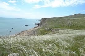 Действия российских властей в Крыму губительны для степей – НААН фото, иллюстрация