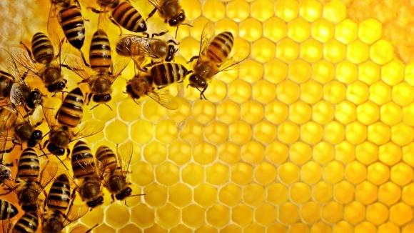 За последние пять лет выросли объемы мировой торговли медом фото, иллюстрация