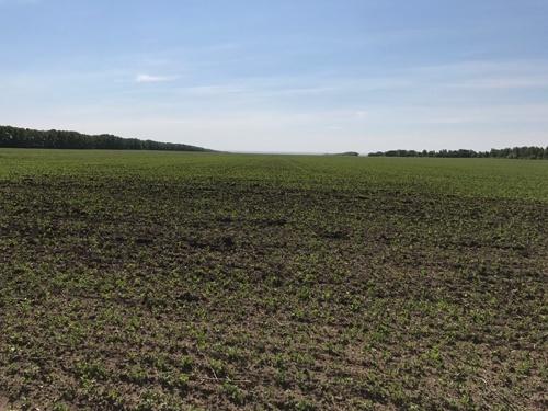 Яровий посів в Чернігівській області виконано на 85% прогнозованих площ фото, ілюстрація