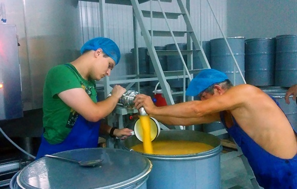 Кооперация пасечников укрепит экспорт украинского меда - ФАО фото, иллюстрация