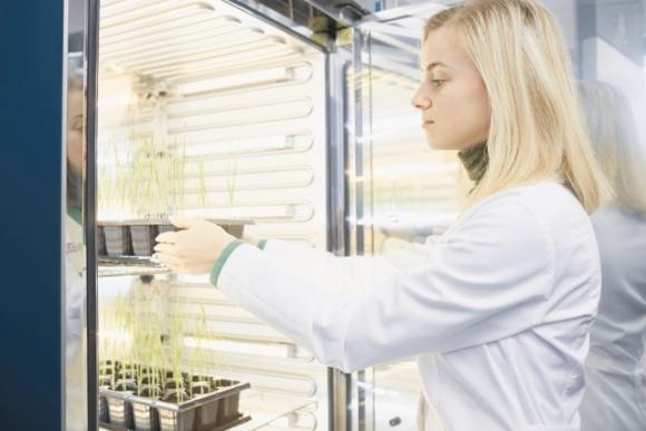 «Зимние» исследования от «Института здоровья растений» фото, иллюстрация