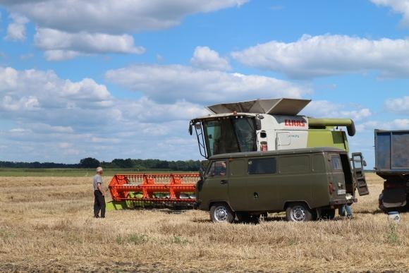 Частка фуражної пшениці в урожаї-2018 становить 40% фото, ілюстрація