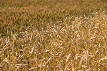 Урожай-2018: історичний рекорд оновлено фото, ілюстрація