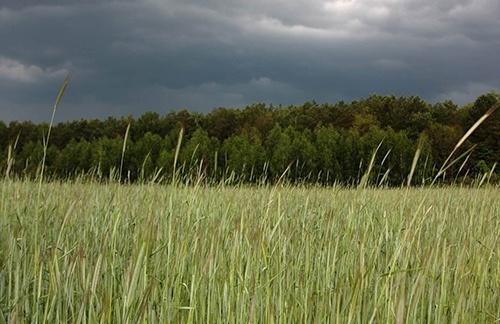 В некоторых регионах Украины усугубилась ситуация с влагозапасами почвы фото, иллюстрация