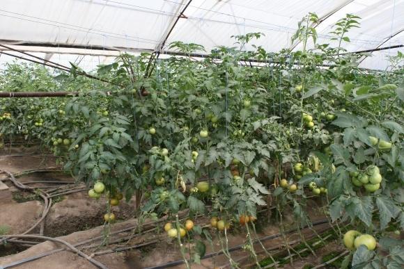 FAO роздасть 50 комплектів крапельного зрошення серед малих фермерських господарств у прифронтовій зоні фото, ілюстрація