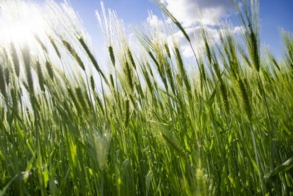 Corteva Agriscience запускає Inatreq™ Active для зернових в Європі фото, ілюстрація