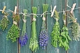 Україна практично не використовує експортний потенціал на ринку лікарських трав фото, ілюстрація