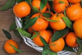 T.B. Fruit відкриє у Грузії завод з переробки мандаринів  фото, ілюстрація