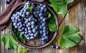Херсонские фермеры прогнозируют хороший урожай винограда фото, иллюстрация