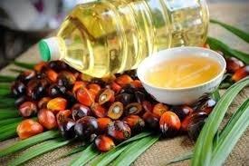 Индия настроена удвоить производство растительного масла уже до 2022 года фото, иллюстрация
