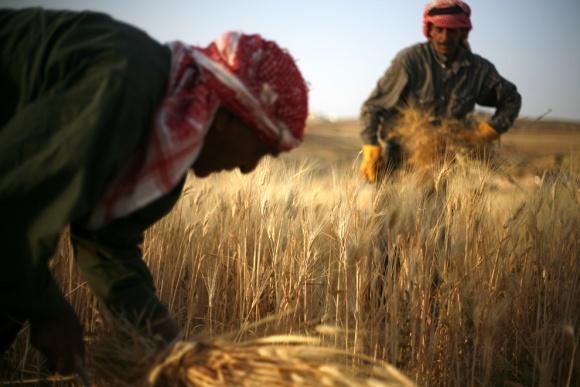 Індія зайняла ключову позицію в імпорті української пшениці фото, ілюстрація