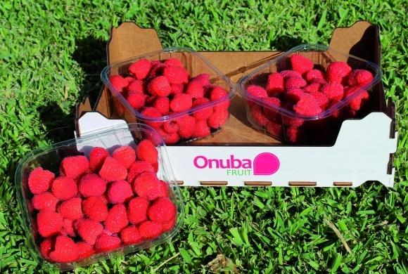 Европейский регион-производитель ягод отказывается от садовой земляники фото, иллюстрация