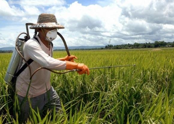 Еврокомиссия не хочет запрещать аграриям использовать инсектициды фото, иллюстрация