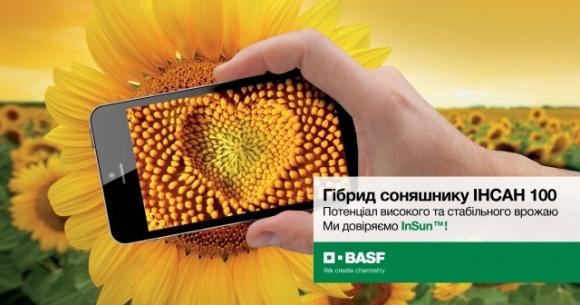 BASF выводит на рынок первый гибрид подсолнечника традиционной системы выращивания фото, иллюстрация