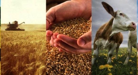 Інвесторам в Україні цікаві виробництво зернових, молочної та м'ясної продукції, - експерт фото, ілюстрація