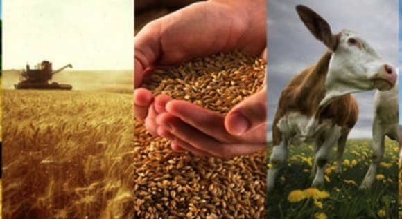 Инвесторам в Украине интересны производство зерновых, молочной и мясной продукции фото, иллюстрация
