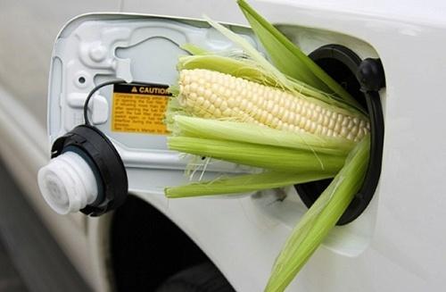 ALFA Smart Agro отримала сертификат ISCC для постачання в ЄС кукурудзи та ріпаку фото, ілюстрація