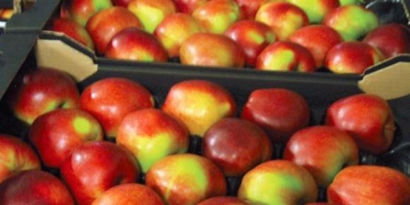 Польські садівники підвищують ціни на промислове яблуко фото, ілюстрація