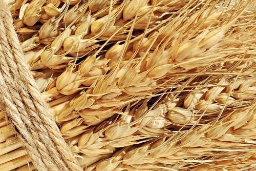 ДПЗКУ профінансувала сільгоспвиробників на 350 млн грн фото, ілюстрація