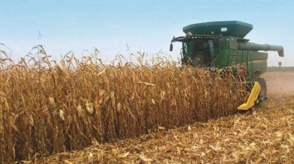 Жнива 2020: в Україні розпочато збирання кукурудзи фото, ілюстрація