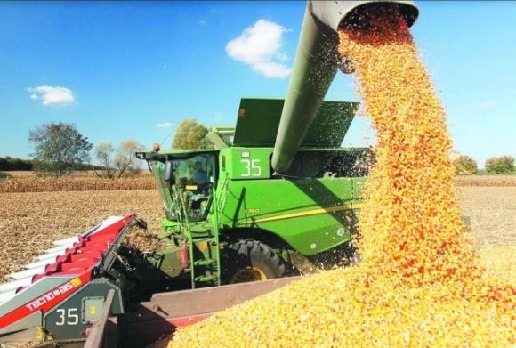 В Украине началась уборка кукурузы и сои фото, иллюстрация