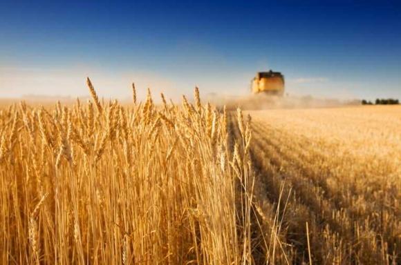 Як німецькі фахівці навчають українців сільського господарства? фото, ілюстрація