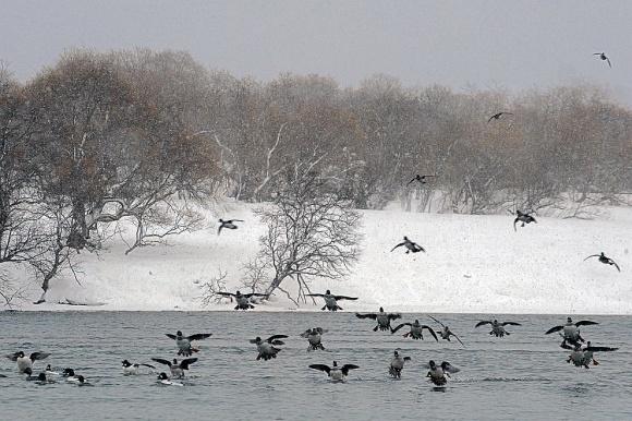 В конце февраля ситуация с птичьим гриппом обострится фото, иллюстрация