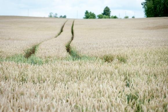 Більше половини земель Литви в руках у великих землевласників фото, ілюстрація