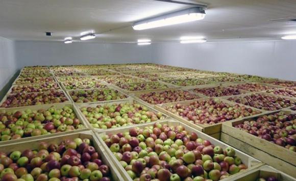 У Дніпропетровській області побудують найбільший в Україні холодильник для зберігання яблук фото, ілюстрація