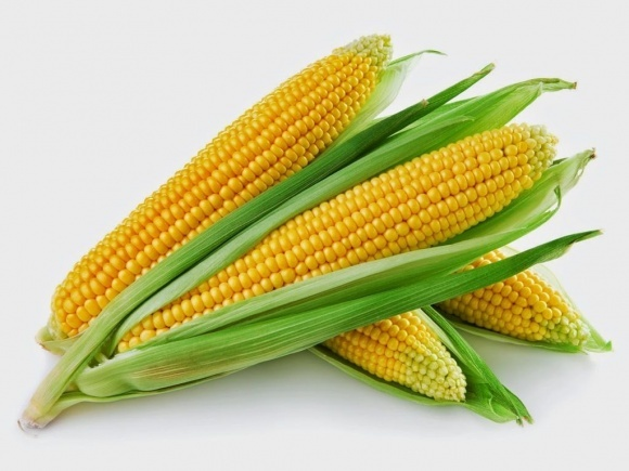 99% вітчизняного експорту насіння становить кукурудза фото, ілюстрація